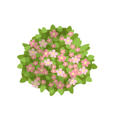 green bush with pink flowers landscape design vector image