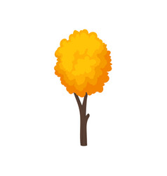 small autumn tree with yellow-orange leaves young vector image