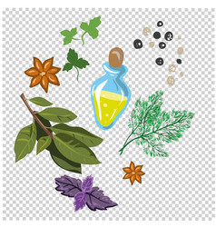 spices and flavorings isolated vector image