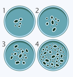 bacteria growth stages bacterium in petri dishes vector image