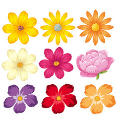 Different kinds of colorful flowers vector