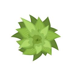 Green plant landscape design element top view vector