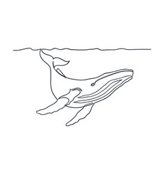 Humpback whale line art vector