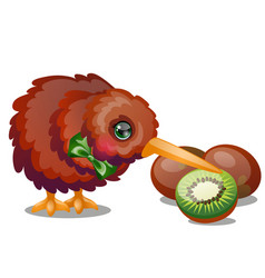 Kiwi bird and ripe fruit isolated on white vector