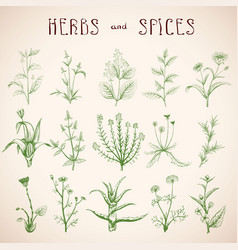 set herbs and spices vector image