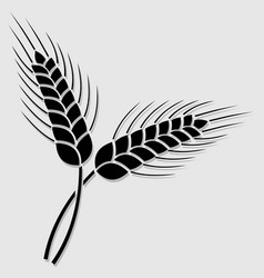 Wheat ear icon isolated on white background vector