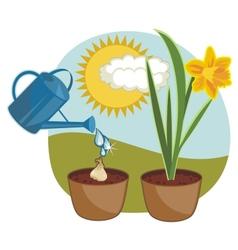 growing daffodil vector image vector image
