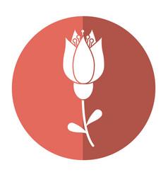 tulip flower decoration image shadow vector image vector image