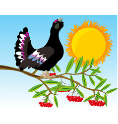 Bird black grouse on branch rowanberry vector