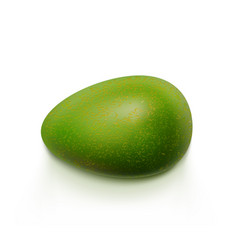 Fresh green avocado isolated on white background vector