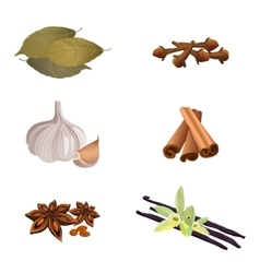 Garlic cinnamon sticks dried cloves bay leaves vector