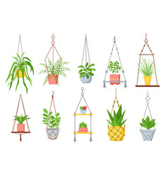 home plant in hanging pot houseplant succulent vector image