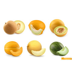 Melons sweet fruits 3d realistic icon set vector