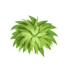 Summer green plant landscape natural design vector