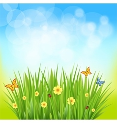 green grass on a blurred background of nature vector image vector image