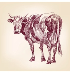cow hand drawn llustration realistic sketch vector image