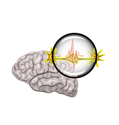 brain and neurons vector image