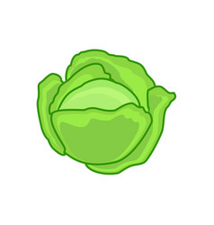 Cabbage or lettuce vector