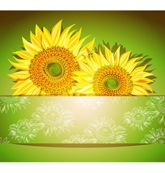 Green Sunflower Background vector image