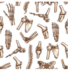 Human skeleton bone seamless pattern background vector