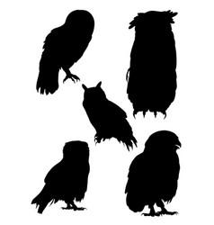 Owls birds silhouette vector