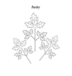Parsley green outline vector