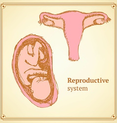 Sketch reproductive system in vintage style vector