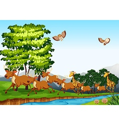 Deers and giraffes in the field vector