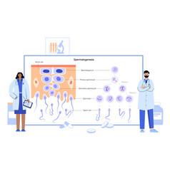 mitosis process concept vector image