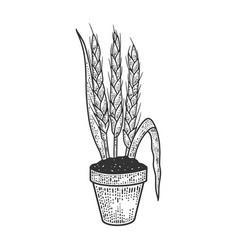 Wheat in flower pot sketch vector