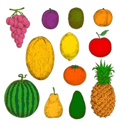Fresh and juicy fruits sketches vector image vector image