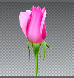 realistic rose bud with stem and leaves closeup vector image