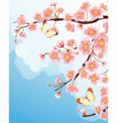 Sakura cherry blossom vector image