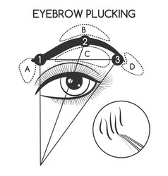 eyebrow plucking concept vector image vector image