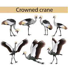 collection crowned cranes in colour image vector image