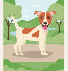Cute jack russell terrier dog pet in camp vector