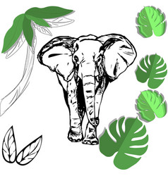 hand drawing of an elephant a sketch and a paper vector image