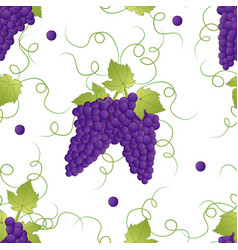 Pueple grape seamless on white background vector