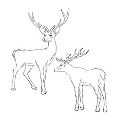 beautiful noble proud sika deer are ruminant vector image