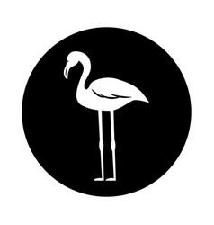flamenco exotic bird icon vector image vector image