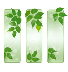 Three nature banners with green fresh leaves vector image vector image