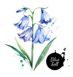 hand drawn watercolor bluebell flower painted vector image