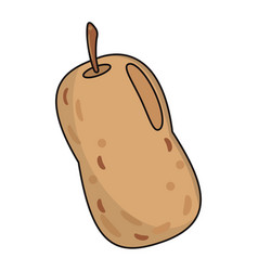 potato food fresh image vector image