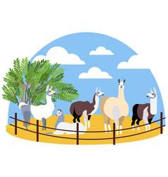 seth animals lama farming in minimalist style vector image