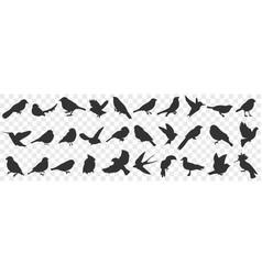 silhouettes birds doodle set vector image