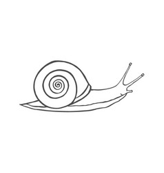 sketch shell concept vector image