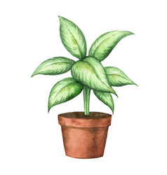 Watercolor clipart with a dieffenbachia in vector