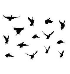 flying bird silhouettes vector image vector image