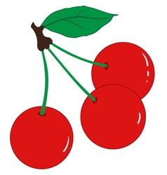 Three ripe cherries vector image