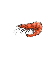 cartoon shrimp drawing isolated on white vector image